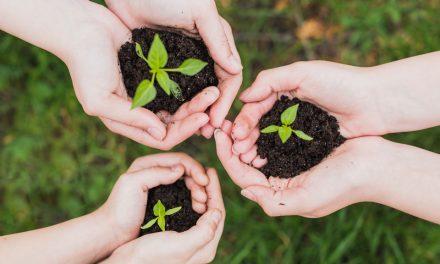 No Dia Mundial do Meio Ambiente, conheça mais sobre o Memorial