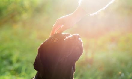 Luto por animais: uma dor pouco discutida