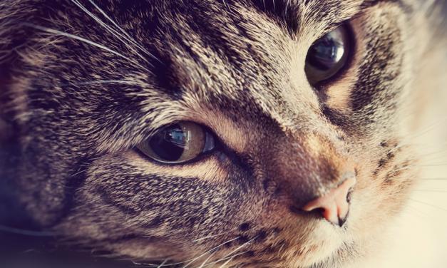 Enterrar animais de forma irregular gera riscos à saúde pública