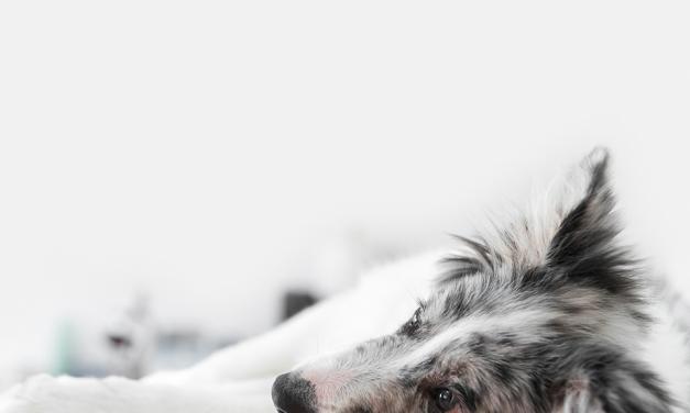 Você sabia que animais também sentem luto? Entenda: