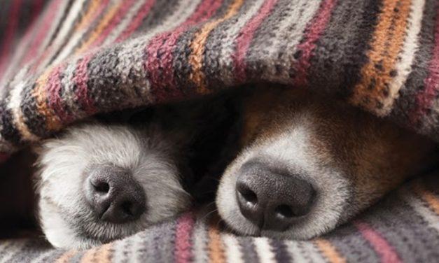 Saúde pet: cuidados de inverno que você precisa ter