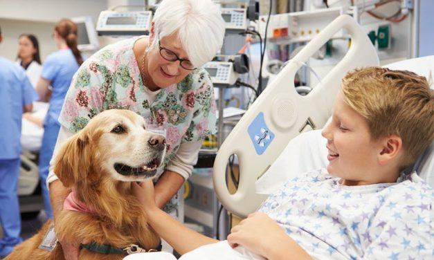 Pet Terapia: como os animais podem ajudar em tratamentos de saúde?
