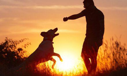 Já pensou em incluir seu pet na prática de exercícios? Entenda!