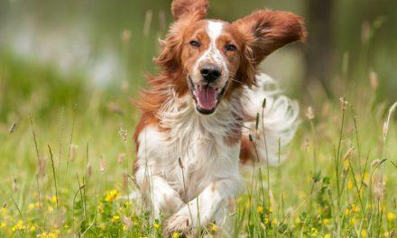 Conheça 3 práticas sustentáveis para criação de um pet